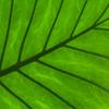 Jigsaw: Leaf…